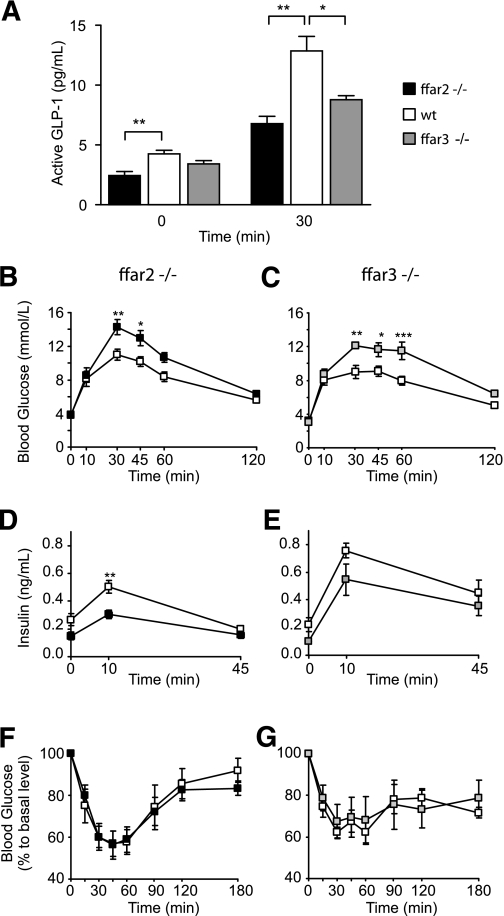 ffar2 and ffar3 knockout mice have impaired glucose tolerance. A : Glucose stimulated <t>GLP-1</t> secretion in vivo. ffar2 −/− and ffar3 −/− mice and wild-type littermates ( n = 5 each) were dosed with DPP4 inhibitor at a dose of 20 mg/kg per os after a 4-h fast. Thirty minutes post–DPP4 inhibitor dosing, mice were dosed with 1.5 g/kg glucose per os Plasma active GLP-1 was assessed by a MesoScale assay at 0 and 30 min of the oral glucose tolerance test. Data represent means ± 1 SEM, and statistical significance was assessed by Student t test: * P