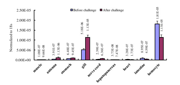 Tissue distribution of the prophenoloxidase-activating enzyme mRNA from white shrimp Litopenaeus vannamei (lvPPAE1) before and after Vibrio harveyi challenge . The transcription level was detected by Taqman qRT-PCR. Gene expression level was normalized to 18 s rRNA. Five samples were taken as replicates.