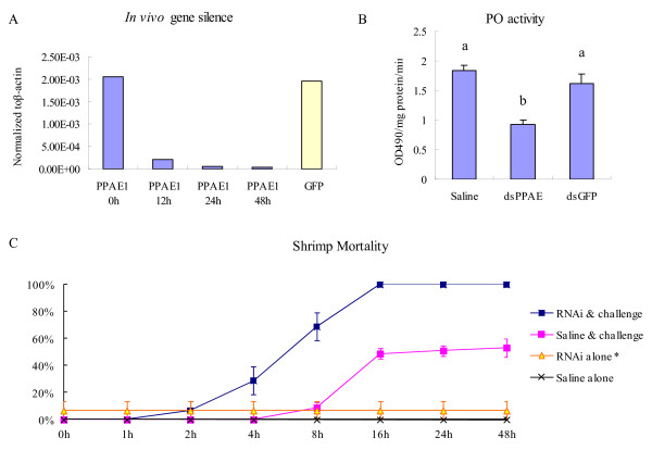 Gene silencing of the prophenoloxidase-activating enzyme from white shrimp Litopenaeus vannamei (lvPPAE1) and related bioassays . (A) RNAi of lvPPAE1 using gene-specific dsRNA analyzed by qRT-PCR and normalized to β-actin. Five samples were mixed and analyzed 12 and 24 h after the first dsRNA injection and another 24 h after the second injection. (B) Phenoloxidase activity assay after gene silencing, analyzed by analysis of variance (ANOVA) followed by Duncan's multiple range test. Five individuals were taken as replicates. Bars with different letters are significantly different ( P