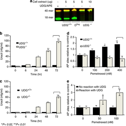 UDG activity determines the levels of uracil and AP sites in DNA. ( a ) UDG activity assay in vitro . Oligonucleotide duplexes containing U:G were incubated with cell extracts (5–10 μ g) from UDG +/+ , DLD1 flag , and UDG −/− cells at 37°C for 1 h. Reaction products were resolved by electrophoresis through denaturing 20% polyacrylamide gels. ( b ) Incorporated uracil detected in UDG +/+ and UDG −/− cells by HPLC/MS/MS analysis. Cells were treated with pemetrexed (10 μ M) for 6, 24, 48, and 72 h. Cells were harvested and 40 μ g of extracted DNA were in vitro reacted with purified UDG (10 U) for 2 h. ( c ) Cells were treated with 5-FU (10 μ M) for 6, 24, 48, and 72 h. Uracil was quantified in the reaction product by LC-MS analysis. ( d ) AP site formed by pemetrexed in UDG +/+ and UDG −/− cells. Cells were treated with pemetrexed (0–400 nM) for 24 h. DNA was extracted and AP sites measured by ARP reagent. ( e ) AP site detected in DNA of UDG −/− cells after reacted with purified UDG in vitro . Cells were treated with pemetrexed (0–100 nM) for 24 h and 40 μ g DNA extracted from cells was in vitro reacted with purified UDG (10 U) for 2 h and AP sites were measured using ARP. Results are representative of three independent experiments
