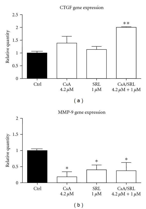 CsA/SRL cotreatment increased CTGF and decreased MMP-9 gene expression in HMCs. HMCs were grown to confluency and treated with vehicle, 4.2 μ M CsA, 1 μ M SRL or CsA/SRL, 4.2 μ M CsA + 1 μ M SRL for 24 hours. CTGF and MMP-9 expression was detected by quantitative PCR. (a) 24-hour CTGF gene expression and (b) MMP-9 gene expression. Each column represents the mean ± SEM of a minimum of 3 independent experiments performed in duplicate. Data was analysed by ANOVA and comparisons between control and multiple treatment groups were made using the Dunnet posttest. *Indicates statistical difference compared to control. * P