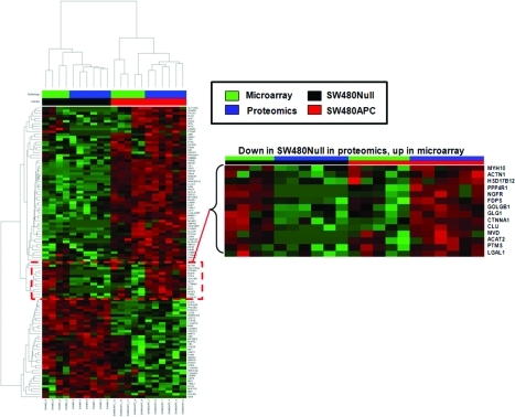 Proteomic and transcriptomic profile comparison of SW480APC and SW480Null. Heat map shows supervised clustering analysis of shotgun proteomics data and transcriptomic data for 111 differentially expressed proteins (adjusted quasi p -value