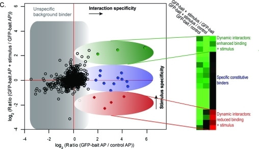 Analysis of interaction dynamics by QUBIC triple SILAC based quantitative mass spectrometry. (A) Experimental workflow for triple SILAC pull-downs to determine Wnt3a-dependent interaction dynamics. The cell line expressing the GFP-tagged protein of interest is light and medium SILAC labeled, the untransfected wild-type control cell line is heavy SILAC labeled. Cells are lysed after two hour treatment with Wnt3a (200 ng/mL) or vehicle solution respectively. GFP-pull-downs are performed separately for each SILAC state. Eluates are combined, separated on a one-dimensional gel into eight slices and in-gel digested. Resulting peptide mixtures are analyzed by high resolution LC-MS/MS on an <t>LTQ-Orbitrap</t> <t>Velos.</t> SILAC ratios are automatically quantified by MaxQuant. (B) SILAC peptide triplets representing peak profiles characteristic of background, constitutive and dynamic binders. (C) Data analysis plot of the ratio representing interaction specificity versus the ratio representing stimulus specificity of the interaction. Filled dots represent significant interactors and of these, constitutive interactors are depicted in blue. Dynamic interactors with enhanced binding to the bait protein are shown in red and those with reduced binding to the bait protein in green.