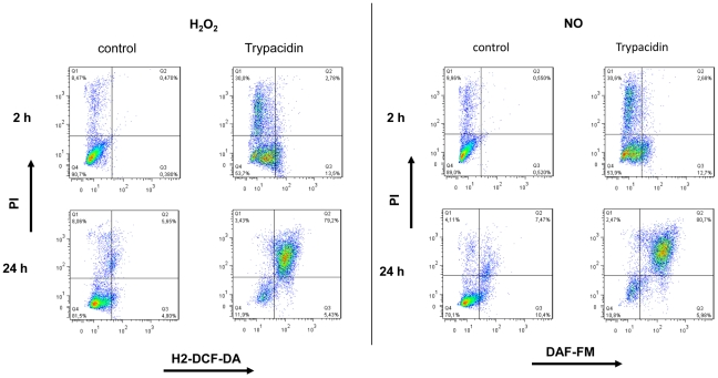 Flow cytometry analysis of H 2 O 2 and NO related to PI staining. <t>A549</t> cells were seeded at 3×10 4 cells/cm 2 and cultured for 24 h. Then, cells were exposed to trypacidin 50 µM or DMSO 1% for 2 h and 24 h. H 2 O 2 and NO production were measured using res pectively H2-DCF-DA, and DAF-FM. IP was used to stain dead cells. Dot-blots are representative of three independent experiments.