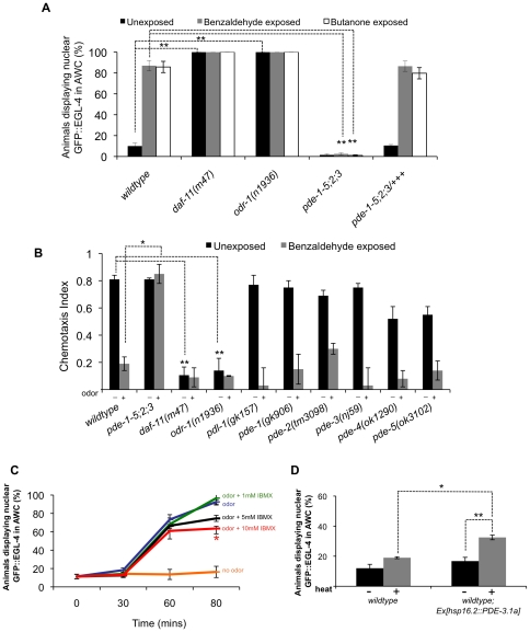 """Decreases in cGMP levels direct the nuclear entry of GFP::EGL-4 in AWC and promote adaptation. (A) Percent of animals displaying nuclear GFP::EGL-4 in AWC of naive (black bars), benzaldehyde-exposed (gray bars) and butanone-exposed (white bars) treatments. **Indicates p ≤0.005 significant differences between nuclear GFP::EGL-4 values of wildtype unadapted animals and odr-1 or daf-11 mutant unadapted animals, and also significant differences between wildtype adapted and pde quadruple mutant adapted values. (B) Chemotaxis response of PDE mutants and the guanylyl cyclase mutants daf-11 and odr-1 to the AWC sensed odor benzaldehyde. """"−"""" indicates unexposed animals and """"+"""" indicates exposed animals. **Indicates p ≤0.005 significant differences between chemotaxis index (CI) values between wildtype unexposed animals and mutant unexposed animals. *Indicates p ≤0.05 significant differences between wildtype odor-exposed CI values and mutant odor-exposed CI values. (C) Populations of GFP::EGL-4 ( pyIs500 ) expressing animals were exposed to the odor benzaldehyde with or without the PDE inhibitor 3-isobutyl-1-methylxanthine (IBMX). Populations exposed to 10 mM concentrations of IBMX displayed a reduced number of animals exhibiting nuclear GFP::EGL-4 in AWC at 80 minutes post exposure to benzaldehyde and IBMX. *Indicates p ≤0.05 significant differences between odor treated animals with IBMX versus odor treated animals without IBMX. (D) Expression of the cGMP phosphodiesterase PDE-3 under a heat-inducible promoter causes some increase in the number of animals displaying nuclear GFP::EGL-4. *Indicates p ≤0.05 significant differences between wildtype and transgenic animals after heat induction; **Indicates p ≤0.005 significant differences between transgenic animals with and without heat induction. """"−"""" indicates no heat induction and """"+"""" indicates after heat induction. P values calculated using the Student's t -test. Error bars represent the S.E.M."""