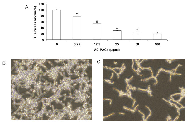Effect of AC-PACs on C. albicans biofilm formation . Panel A: C. albicans biofilms were quantified by staining with crystal violet. Assays were done in triplicate and the means ± SD from three independent experiments were calculated. A value of 100% was assigned to the biofilm formed in the absence of AC-PACs. *, significantly lower than the value for the untreated control ( P