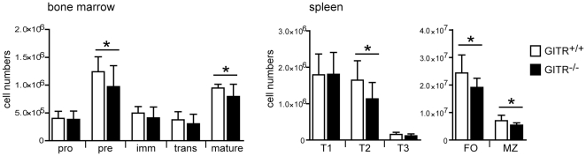 Absence of GITR expression slightly affects generation or maintenance of mature B cells. Bone marrow and spleen cells from GITR +/+ (129S1 strain, white bars) and GITR −/− (black bars) mice were analyzed ex vivo by flow cytometry to determine the numbers of B cells at different developmental stages. The following B220 + B cell subsets were defined in the bone marrow: pro-B (IgM − CD2 − ), pre-B (IgM − CD2 + ), immature B (IgM + IgD − ), transitional B (IgM high IgD low ) and mature/recirculating B (IgM low IgD high ) cells. The following B220 + B cell subsets were defined in the spleen: transitional T1 (CD93 + IgM + CD23 − ), transitional T2 (CD93 + IgM + CD23 + ), transitional T3 (CD93 + IgM low CD23 + ), follicular (FO, CD1d −/low CD21 + ), and marginal zone (MZ, CD1d high CD21 high ). n = 10 from 5 independent experiments. Error bars represent SD; * p