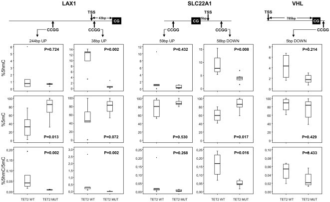 Analysis of 5 hmC and 5 mC levels in genes hypermethylated in CMML TET2-mut in comparison to TET2-wt patients. The percentage of 5 hmC, 5 mC and ratio between 5 hmC/5 mC were measured in 8 CMML  TET2 -mut and 5  TET2 -wt patient samples using qPCR. Two CpG located 5′upstream (−38 and −244 bp respectively) to the CpG analyzed in the methylation array in the case of  LAX1 ; one upstream CpG (59 bp) and another downstream CpG (58 bp) to the CpG in the case of  SLC22A12  gene and one CpG downstream (5 bp) in the case of  VHL  gene were analyzed. Median values of percentage of 5 hmC, 5 mC or ratio between 5 hmC/5 mC are indicated and P values were obtained using the 2-tailed T test or U Mann Whitney test. CG: CpG dinucleotide included in the array; CCGG: CpG dinucleotide in which 5 hmC and 5 mC have been analysed and TSS: transcriptional start site.