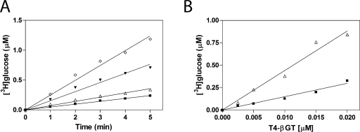 Linearity of glucosylation by recombinant β-GT. (A) Linearity of glucosylase reaction as a function of time with four different concentrations of UDP-[ 3 H]glucose: 50 (◇), 25 (▼), 10 (△), and 5 μM (■). All reaction mixtures contained 0.01 μM β-GT and 2.5 μM 5-hmC and were incubated at 25 °C. Twenty-five microliters of the reaction mixture was spotted on DE81 at 1 min time intervals and processed as described in Experimental Procedures . (B) Linearity of the glucosylase reaction as a function of recombinant β-GT enzyme concentration (0.00025–0.02 μM) with 50 (△) or 25 μM UDP-[ 3 H]glucose (■). Twenty-five microliters of the reaction mixture was spotted on DE81 after incubation with the appropriate concentration of the β-GT enzyme for 2 min.