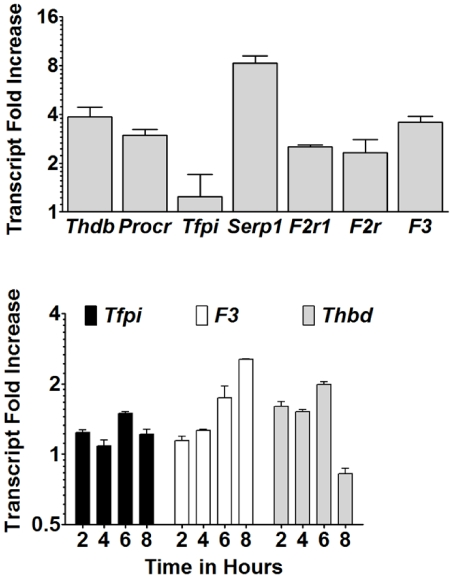 Coagulation factor gene expression is elevated in IP mice and malaria-exposed murine trophoblasts. (A) RNA was isolated from conceptuses removed from ED 10 UP (n = 5) and IP (n = 6) mice. Primers specific for the genes indicated were utilized to measure cDNA expression levels in IP relative to UP mice. Data are normalized against murine 18S RNA. Data are expressed as the ratio of fold increase in IP mice to that of UP mice ± SEM. (B) SM9-1 trophoblasts were stimulated with P. chabaudi AS-iRBCs and RNA isolated over the time course indicated. QRT-PCR was conducted as in panel A. Data are expressed as the ratio of fold increase relative to time matched SM9-1 trophoblasts stimulated with uninfected RBC ± SEM and are representative of four separate experiments.