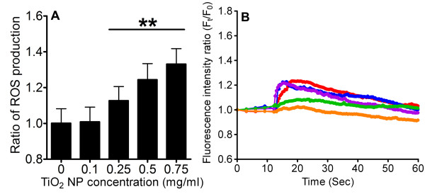 Measurement of intracellular ROS level and the associated changes in [Ca 2+ ] C . (A) RBL-2H3 cells were exposed to TiO 2 NPs at concentrations 0, 0.1, 0.25, 0.5 and 0.75 mg/ml. The generation of ROS was measured by fluorescence imaging. The level of ROS increased as a function of increasing TiO 2 NP concentration (n ≥ 50, **p