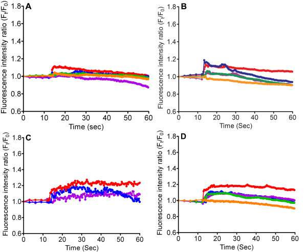 Measurement of [Ca 2+ ] C after stimulation by TiO 2 NPs . RBL-2H3 cells were stimulated with TiO 2 NPs with concentrations that vary from 0.1 mg/ml-1 mg/ml, in the presence of (A) U73122 (10 μM), (B) 2-APB (50 μM) and (C) Xestospongin (20 μM) and (D) Thapsigargin (100 nM). The colors used are in accordance with Figure 2A. Each line represents the average fluorescent intensity of more than 200 cells.