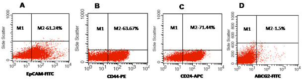 Percentage positivity of putative cancer stem cell markers in primary retinoblastoma (RB) tumors. A : Representative scatter plot shows 61.24% of epithelial cell adhesion molecule (EpCAM) positive cells in the RB tumor. B : Representative scatter plot shows 63.67% of cluster determinant (CD)44 positive cells in the RB tumors. C : Representative scatter plot shows 63.67% of CD24 positive cells in the RB tumors. D : Representative scatter plot shows 1.5% of ATP binding cassette protein G2 (ABCG2) positive cells in the RB tumors. EpCAM-FITC represents EpCAM + cells identified using fluorescein isothiocyanate (FITC) labeled antibody. CD44-PE represents CD44 positive cells identified using phycoerythrin labeled antibody. CD24-APC represents CD24 positive cells identified using allophycocyanin labeled antibody. ABCG2-FITC represents ABCG2 positive cells identified using FITC labeled antibody.