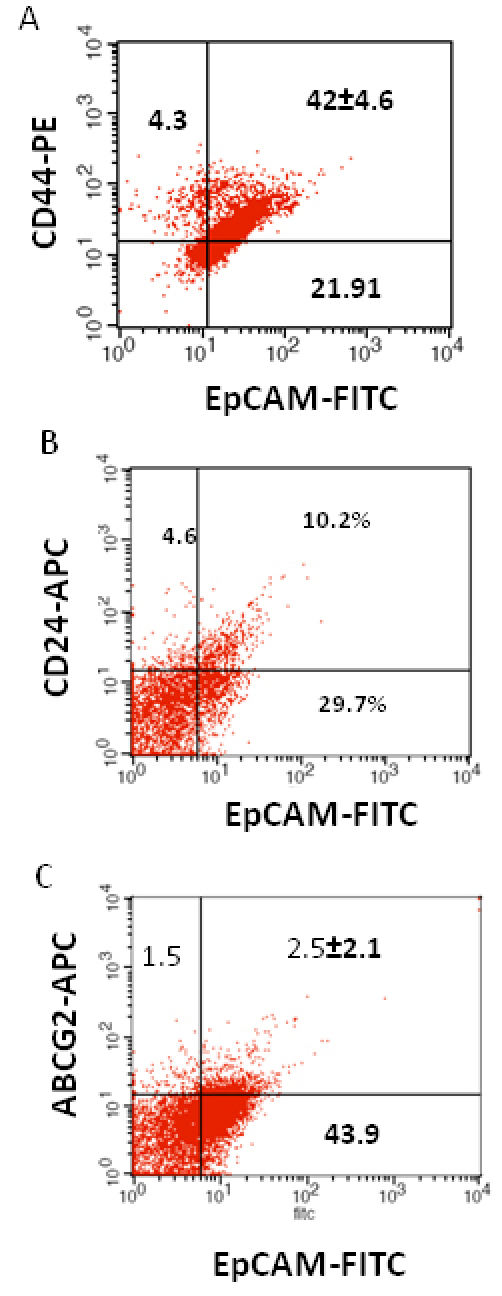 Investigation of the co-expression of epithelial cell adhesion molecule (EpCAM) with cluster determinant (CD)44, CD24 and ATP binding cassette protein G2 (ABCG2) markers in retinoblastoma (RB) tumor 3. A : Scatter plot shows the co-expression of EpCAM with Cluster determinant-44 (CD44). B : Scatter plot shows the co-expression of EpCAM with CD24. C : Scatter plot shows the co-expression of EpCAM with ABCG2. EpCAM-fluorescein isothiocyanate (FITC) represents EpCAM positive cells identified using FITC labeled antibody. CD44-PE represents CD44 positive cells identified using phycoerythrin labeled antibody. CD24-APC represents CD24 positive cells identified using allophycocyanin labeled antibody. ABCG2-APC represents ABCG2 positive cells identified using allophycocyanin labeled antibody.