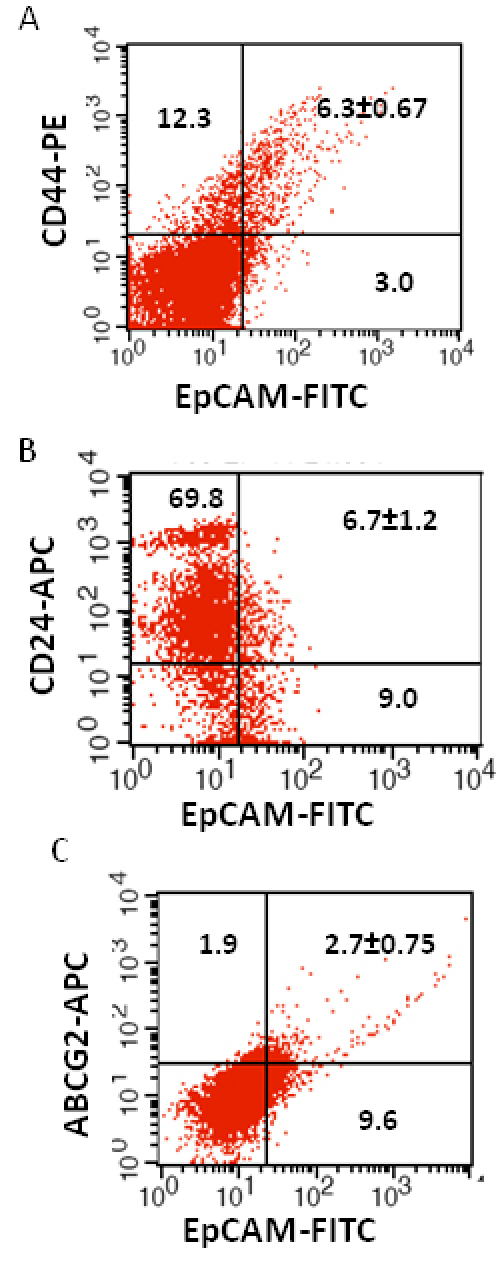 Investigation of the co-expression of epithelial cell adhesion molecule (EpCAM) with cluster determinant (CD)44, CD24 and ATP binding cassette protein G2 (ABCG2) markers in retinoblastoma (RB) tumor 6. A : Scatter plot shows the co-expression of EpCAM with CD44. B : Scatter plot shows the co-expression of EpCAM with CD24. C : Scatter plot shows the co-expression of EpCAM with ABCG2. EpCAM-fluorescein isothiocyanate (FITC) represents EpCAM positive cells identified using FITC labeled antibody. CD44-PE represents CD44 positive cells identified using phycoerythrin labeled antibody. CD24-APC represents CD24 positive cells identified using allophycocyanin labeled antibody. ABCG2-APC represents ABCG2 positive cells identified using allophycocyanin labeled antibody.