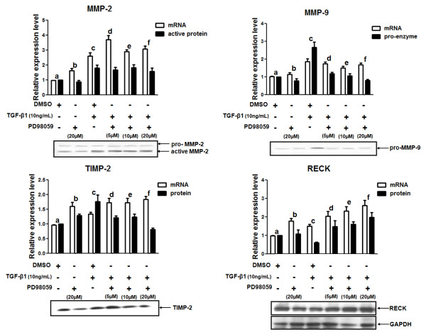 Relative mRNA and protein expression of MMPs and MMPs inhibitors in MDA-MB-231 cells treated with TGF-β1 and an ERK1/2 inhibitor . MDA-MB-231 cells were pre-treated for 1 h with different concentrations (0, 5, 10 or 20 μM) of PD98059 (ERK1/2 pharmacological inhibitor) and then stimulated with 10 ng/mL TGF-β1 by 20 h. Total RNA from these samples was used to analyze the mRNA expression levels of MMPs (MMP-2 and MMP-9) and MMPs inhibitors (TIMP-2 and RECK) by qRT-PCR. The levels of pro-enzyme and active MMP-2 and MMP-9 proteins were evaluated by zymography. Total protein lysates were used to measure the protein expression levels of RECK by Western blotting. The GAPDH protein expression was used as the loading control in Western blotting assays. Conditioned medium from these cultures were also utilized to analyze the TIMP-2 protein levels by Western blotting. Results are presented in graphics as means ± standard errors from three independent experiments. The Western blotting figures are representative of one experiment. For mRNA expression levels fold change: MMP-2 (a versus c: p