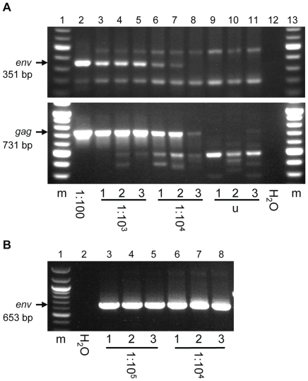 Sensitivity analysis of XMRV PCR assays. PCR products were analyzed on agarose gels containing ethidium bromide. (A) Non-nested PCR assays targeting the XMRV env gene (top panel) and the gag gene (bottom panel), and (B) a nested PCR assay targeting the XMRV env gene were evaluated for their ability to detect either (A) provirus in XMRV-infected PNT1A cell DNA or (B) provirus in XMRV-infected LNCaP cell DNA diluted in uninfected cell DNA. Dilutions of infected cells in uninfected cells are indicated by ratios, i.e. 1∶10 4 indicates one infected cell diluted in 10 4 uninfected cells. (m) 100 base pair molecular weight marker, (H 2 O) water used in place of DNA template as a negative control, (u) uninfected PNT1A DNA used as template for negative control.