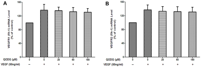 QODG insignificantly regulates the VEGF-triggered activation of VEGFR1 and VEGFR2 mRNAs expression in HUVECs. HUVECs (5×10 5 cells/well) were treated with or without VEGF (50 ng/mL) and DMSO (0.1%) or various concentrations of QODG (20, 60, 180 µM) for 24 h. RNA was extracted with TRIzol® Reagent (Invitrogen, Life Technologies, Grand Island, NY, USA), reverse transcribed with <t>PrimeScript™</t> RT reagent kit (TaKaRa, Otsu, Shiga, Japan), and quantitated by qRT-PCR using SYBR® Premix Ex Taq™ (TaKaRa, Otsu, Shiga, Japan). Cells receiving only DMSO (0.1%) served as a vehicle control. The levels of VEGFR1 and VEGFR2 mRNAs are normalized by β-actin and expressed as percentages of the vehicle control (100%) in mean ± SD from three independent experiments in triplicates. P > 0.05 vs. VEGF-treated control.