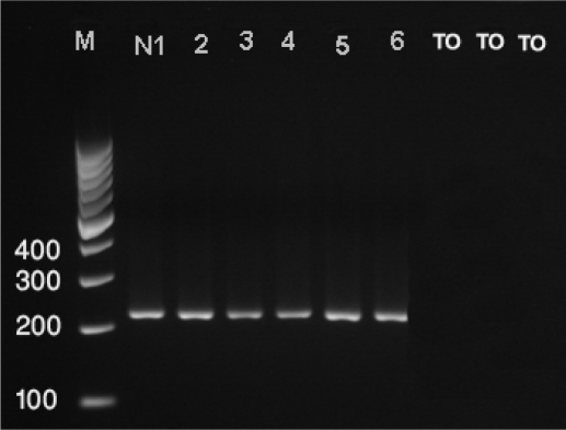 <t>PCR</t> analysis of extracted <t>DNA</t> from Nosema spore using primers ( 218 MITOC) specific for Nosema ceranae derived from 16 SrRNA of the protozoa( Lane 1-6), and the negative controls (TO1-3)