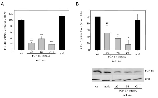 RNAi-mediated knockdown of FGF-BP in LS174T colon carcinoma cells . LS174T cells stably mass-transfected with shRNA expression plasmids and clonally selected show reduced FGF-BP expression as determined on mRNA (qRT-PCR, A) and protein level (Western blot, B).