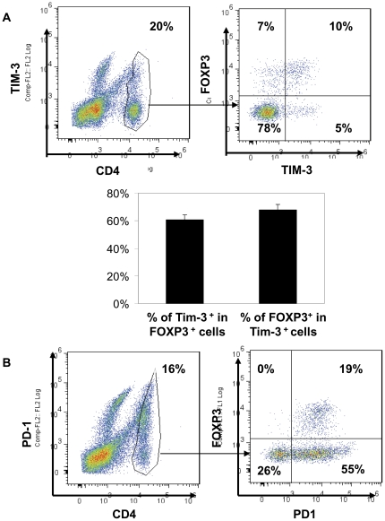 TIM-3 expression on CD4 + TILs and Treg. TILs were harvested from lung cancer tissue. Cells were then stained for CD4, TIM-3, and FOXP3 (A) or CD4, PD-1, and FOXP3 (B). Lymphocytes were gated for further analysis of CD4 and CD8 T cells. The percentage of each population within CD4 + T cell compartment was indicated. Data shown are representative of five independent experiments.