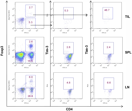 Expression of Tim-3 on TILs in mouse model of transplantable tumor. 6–8-week-old C57BL/6 mice were inoculated with 2×10 5 B16F0 cells i.d., tumor samples, spleens, and lymph nodes were removed when tumor sizes reached around 15 mm in diameters on day 20. TILs, splenocytes, and lymph node cells were isolated for analysis by flow cytometry. Tim-3 expression on mouse CD4 + Foxp3 + or CD4 + Foxp3 − T cells is shown. Data shown are representative of five independent experiments.