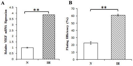 Effects of intermittent hypoxia on VEGF, a hypoxia-response gene and cell survival. ( A ) Real-time PCR. Total RNA was extracted from normoxic (N), and intermittent hypoxia (IH) conditioned neuroblastoma cells using Trizol and cDNA was generated by reverse transcription. Real-time PCRs were done to measure VEGF gene transcript. **P
