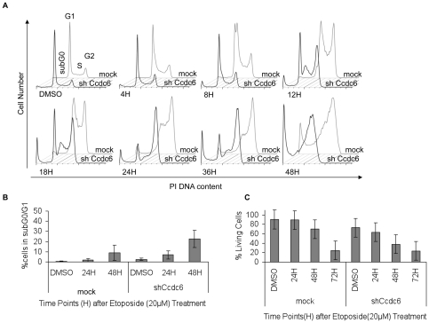 Deficient S phase checkpoint regulation upon etoposide treatment in the absence of CCDC6. ( A ) HCT116 cells were treated with 20 µM etoposide and cells were harvested at predetermined time points for cell cycle analysis. In the absence of CCDC6, no S phase accumulation is observed and the transition to G 2 phase is accelerated. One representative experiment is shown, out of three performed. ( B ) Concomitant apoptotic cell death was quantified by measuring the subG 0 /G 1 DNA content. CCDC6 knock down cells showed higher levels of apoptosis, at earlier time point, in comparison to the control, in response to genotoxic stress upon etoposide treatment. ( C ) The percentage of cell survival was assessed by gating for PoPRO and 7-AAD negative cells. CCDC6 knock down resulted in lower cell survival upon etoposide induced genotoxic stress. The assays were performed in triplicates.