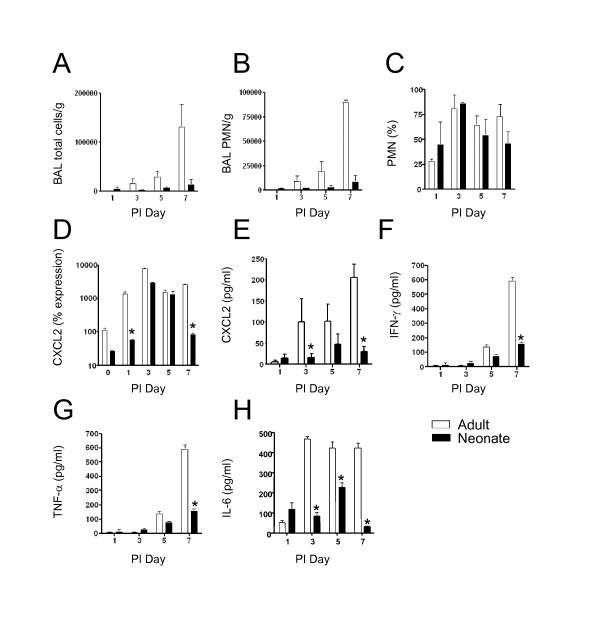Neutrophil influx and CXCL2 expression were lower in neonatal lungs . Adult and neonatal C57BL/6 mice were inoculated with <t>SeV</t> 500 <t>pfu/g</t> body weight. a ) On the indicated days, BAL was performed and total BAL fluid cells were counted. b ) To enumerate the neutrophils, BAL fluid cells were subjected to Wright Giemsa staining and differential cell counting. c ) Percentage of neturophils of total BAL cells. d ) Whole lung RNA was analyzed by real-time PCR for CXCL2. * p