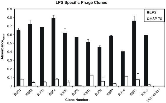 Identification of LPS specific peptide mimotopes. LPS antibody was immobilized at a concentration of 1 µg per well of a 96-well plate. Phages (2×10 11 ) expressing 7-mer peptides were initially added to the well of a 96-well plate containing immobilized LPS antibody after which non-specific phages were removed. Twelve random phage clones were selected from three rounds of panning and specificity to LPS antibody (black bars) was confirmed by ELISA using HSP70 antibody (white bars) as a negative control. All 12 (RS01-RS12) clones selected displayed specific reactivity to LPS antibody, as determined using the HRP labeled anti-M13 phage antibody which was detected by the HRP substrate SIGMAFAST™ OPD and absorbance measured at 490 nm. Each experiment was repeated three times with similar results observed and the standard deviation shown above each sample represents three replicates in one experiment.