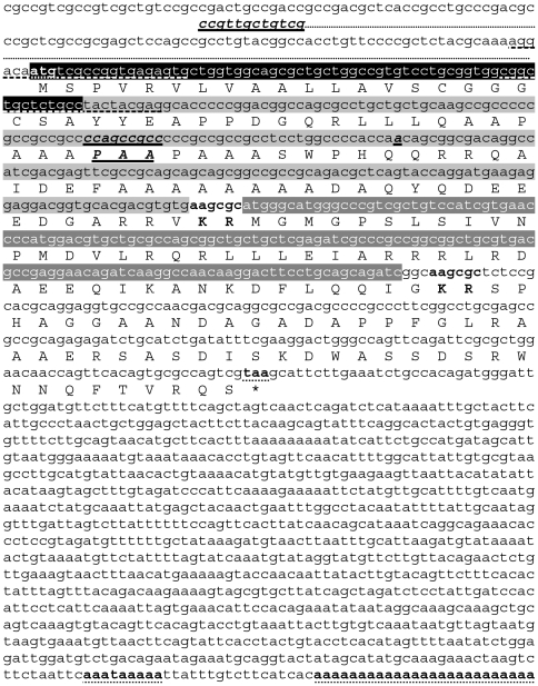 Sequences of the S. gregaria OMP-DH precursor cDNAs and the corresponding amino acid sequences. The longest of both precursor cDNAs (OMP-DH-L precursor cDNA, GenBank: JN591547) is shown here. Consecutively, the coding sequences for the signal peptide (white characters, highlighted in black), the OMP-peptide (black characters highlighted in light gray) and the CRF-like peptide (white characters, highlighted in dark gray) are represented. Predicted dibasic cleavage sites are denoted in bold. Start and stop codons, polyadenylation signal and poly(A) tail are denoted in bold and dotted underlined. The shorter precursor cDNA ( S. gregaria OMP-DH-S precursor) differs from the longer one in the 5′UTR, a tripeptide insertion/deletion and a silent point mutation in the OMP-encoding sequence. All these differences are denoted in bold italics and single underlined. The 5′UTR sequence of the OMP-DH-S precursor is depicted under the 5′UTR of the other precursor. The primers used in the 3′RAcE-procedure are dashed underlined.