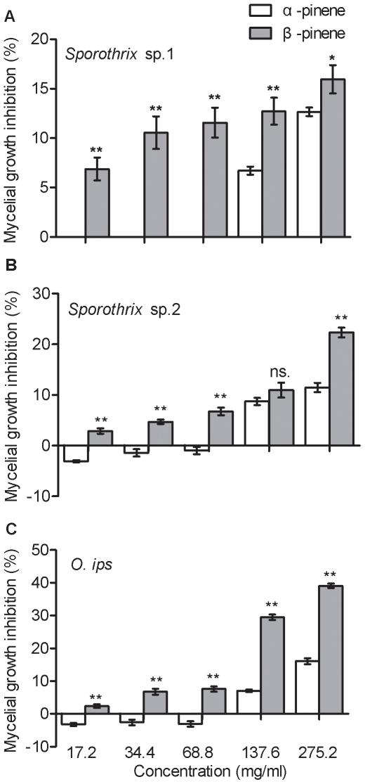 Differences between the mycelial growth inhibition of blue-stain fungal strains (A Sporothrix sp.1, B Sporothrix sp.2, and C O. ips ) on 2% malt extract agar in the presence of α-pinene and <t>β-pinene</t> at the same concentration. Data were analyzed by a t -test for independent samples, for each blue-stain fungal strain in the presence of α-pinene and β-pinene at the same concentration. Each data bar represents the mean of eight independent replicates, and error bars represent standard errors of the mean (** p