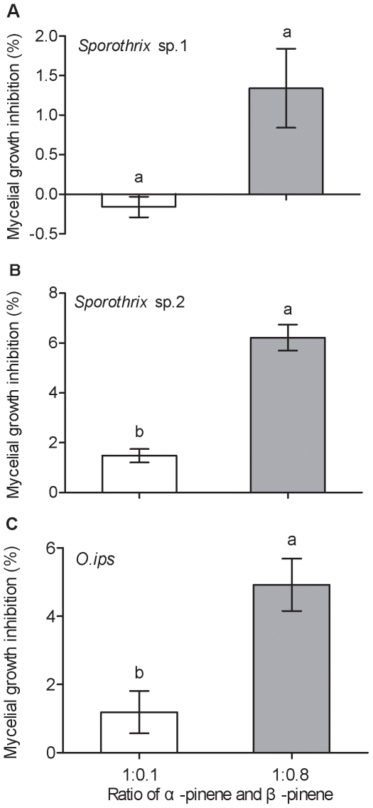 Inhibition of mycelial growth of blue-stain fungus on 2% malt extract agar in the presence of different ratios of α-pinene and β-pinene at 137.6 mg/ml concentration. (A) Sporothrix sp.1, (B) Sporothrix sp.2 and (C) O. ips . Data were analyzed by a t -test for independent samples for each blue-stain fungal strain. Significant differences within species are indicated by different lowercase letters ( p