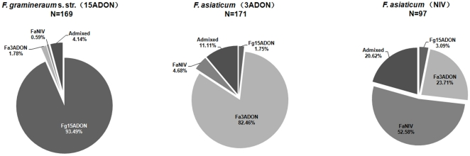 Genetic clusters compositions of F. graminearum s. str. with 15ADON chemotype (N = 169), F. asiaticum with 3ADON chemotype (N = 171) and with NIV chemotype (N = 97).