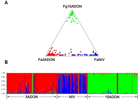 Visual representation of isolate distribution (A) and admixture estimates (B) based on VNTR data. A: green = F. graminearum s. str. with 15ADON type, red = F. asiaticum with 3ADON type, blue = F. asiaticum with NIV type, yellow = F. asiaticum with 15ADON type; B. Visual representation of admixture estimates based on VNTR data for 275 F. asiaticum and 169 F. graminearum s. str. isolates collected from three Chinese populations (3ADON, NIV and 15ADON). Each population is represented by a unique color (3ADON = red, NIV = blue and 15ADON = green). Individual isolates are represented by a distinct vertical line colored to represent the estimated proportion of the isolates genome derived from each population. The horizontal axis consists of a single vertical bar for each of 444 isolates. Isolates were assigned to a specific population when membership fraction ≥0.8.