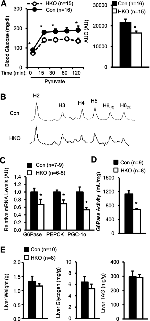 Hepatocyte-specific deletion of TRAF2 suppresses the hepatic gluconeogenic program under HFD conditions. A : HKO and control (TRAF2 flox/flox : n = 13; albumin-Cre: n = 3) male mice were fed an HFD for 17 weeks. Mice were fasted for 16 h and intraperitoneally injected with sodium pyruvate (2 g/kg body wt). Blood glucose was monitored after injection, and AUCs were calculated. AU, arbitrary unit. B : Mice (7–8 weeks) were fed an HFD for 10–12 weeks and subjected to 2 H NMR analysis. 2 H NMR spectra of a MAG derived from plasma glucose (pooled from three animals per group) were presented. C : HKO and control males were fed an HFD for 18 weeks. Total liver RNAs were extracted and used to measure the mRNA abundance of the indicated genes by qPCR. The expression of these genes was normalized to the expression of 36B4. D : HKO and control males were fed an HFD for 18 weeks and fasted for 20–24 h. G6Pase activity was measured in liver microsomal fractions and normalized to microsomal protein levels. E : HKO and control males were fed an HFD for 18 weeks, and liver weight, glycogen contents, and triacylglycerol (TAG) levels were measured. Data are mean ± SEM. * P