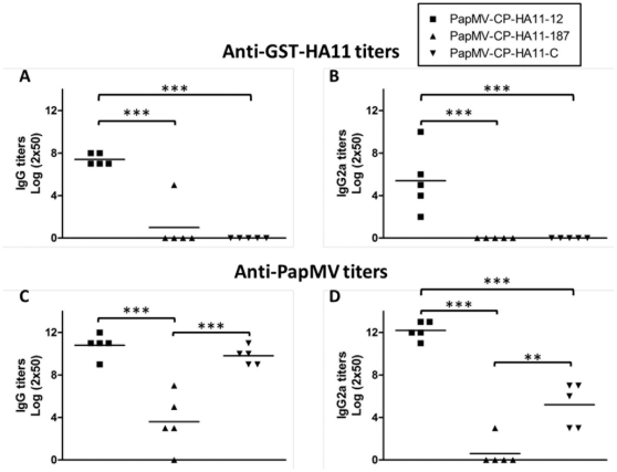 Stable nanoparticles are more immunogenic in animals. Balb/C mice (5 per groups) were immunized twice with a 14-day interval with 100 µg s.c. of PapMV-HA11-12, PapMV-HA11-187 or PapMV-HA11-C, respectively. The total IgG (A) or the IgG2a (B) humoral response directed to the HA11 peptide was measured by ELISA. Also, the total IgG (C) and IgG2a (D) directed to the PapMV CP was measured by ELISA. *** P
