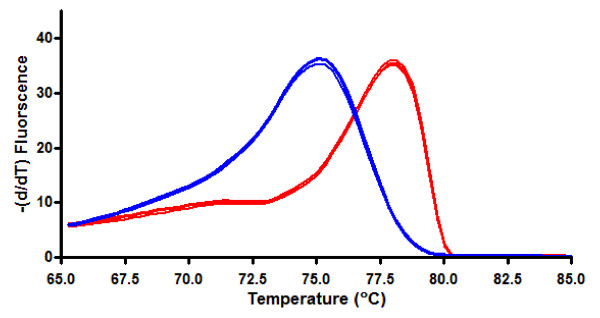 Raw Melt curves (in triplicates) for 100% methylated (red) and 100% unmethylated (blue) BSC DNA standards . Melt curve peaks differed by approximately 2°C and had characteristically different shapes indicating that the methylated and unmethylated DNA are different products.