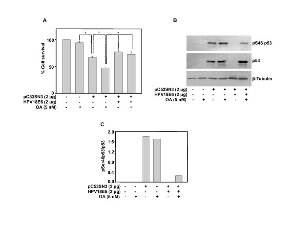 Overexpressed p53 is active and is made non-functional by HPV 18 E6 in H1299, a p53 and E6 null cell line . (A) H1299 cells were transfected with pC53-SN3 and/or HPV18 E6 plasmids and 18 h post <t>transfection</t> cells were treated with OA. MTT assay was performed after 48 h. Bar represents variations among the wells of an experiment done twice in triplicate. * Indicates P