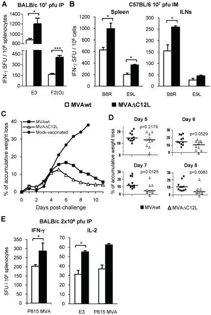 MVAΔC12L improves T-cell memory responses conferring a higher grade of protection against a VACV challenge. ( A ) Groups of four BALB/c mice were i.p immunized with 10 7 pfu of MVAwt or MVAΔC12L. At 40 dpi the magnitude of the T-cell response in the spleen was measured by a more sensitive IFN-γ Elispot assay as described in Materials and Methods . ( B ) Groups of four C57BL/6 mice were i.m inoculated with 10 7 pfu of the indicated vectors and at 40 dpi the magnitude of the response was evaluated by IFN-γ Elispot assay against the CD8 + (B8R) and CD4 + (E9L) VACV peptides in the spleen and ILNs. ( C ) Groups of 11 BALB/c mice were i.p vaccinated with 10 6 pfu of MVAwt, MVAΔC12L or mock immunized and 45 dpi all animals were intranasally challenged with 2×10 6 pfu of the VACV WR strain. Mice were daily weighed during 12 days and the mean % of accumulative weight loss for each group was calculated (see Materials and Methods ). ( D ) Detailed % of accumulative weight loss of individual animals within each indicated group at 5, 6, 7 and 8 days post-challenge, median values are shown. ( E ) Groups of 4 BALB/c mice were i.p immunized with 2×10 6 pfu of the vectors and 40 dpi the response against E3 peptide and/or P815-MVA infected cells was evaluated by IFN-γ and IL-2 Elispot assays. Background (RPMI control) subtracted results are depicted as mean spot forming units (SFU) per 10 6 cells ± SD. Statistically significant differences: *p