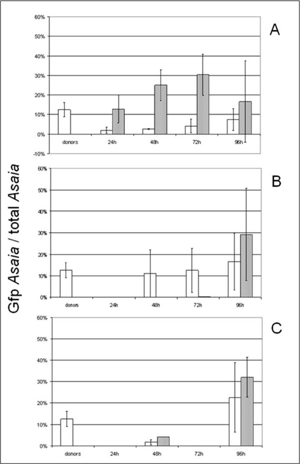 """Relative abundance of G fp-Asaia within the whole Asaia populations. The relative abundance of the tagged strain in total Asaia community is calculated by the ratio between the number of gfp gene copies per sample and the number of Asaia cells (which is Asaia 16S rRNA gene copies divided by four, assuming that four rRNA gene copies per cell are present in Asaia , as reported in Crotti et al. [ 4 ]) per sample. In each graph white columns represent S. titanus individuals, and grey columns represent diets. The """"donors"""" columns refer to average values of donor insects in all trials. """"24h"""", """"48h"""", """"72h"""", and """"96h"""" indicate the time of exposure to co-feeding or the time of incubation after mating with infected individuals. The Gfp-tagged Asaia to total Asaia ratio is indicated in insects and diets submitted to co-feeding trials (A), and to venereal transmission experiments, from male to female (B) and from female to male (C), respectively. The bars on each column represent the standard error."""