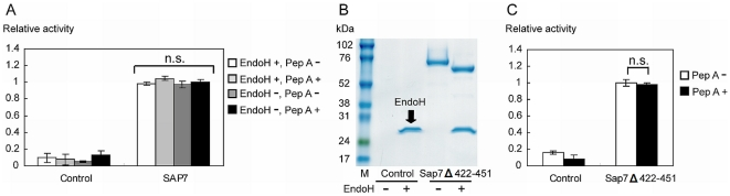 N -glycosylation and fragmentation of Sap7 did not affect its insensitivity to pepstatin A. (A) Proteolytic activity of deglycosylated Sap7. The influence of N -glycosylation on its insensitivity to pepstatin A was evaluated by EndoH treatment. Deglycosylated Sap7 did not show any significant change in proteolytic activity and pepstatin A insensitivity. (B) SDS-PAGE analysis of Sap7Δ422–451 with or without EndoH treatment. The sum of the 52-kDa and 15-kDa wild type fragments ( Fig. 1A ) was almost equal to the 68-kDa fragment of Sap7Δ422–451, indicating that Sap7Δ422–451 existed in a non-fragmented form. M: marker. (C) Proteolytic activity of Sap7Δ422–451. Sap7Δ422–451 was insensitive to pepstatin A. Thus, there was no relationship between the fragmentation of Sap7 and pepstatin A insensitivity. The data represent the average of at least 3 independent experiments. Error bars are shown as ±S.E.M. n.s.; not significant by Tukey's test.
