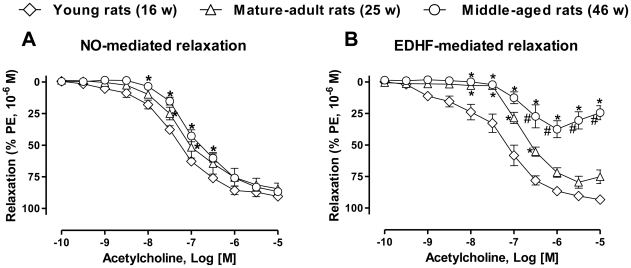 Acetylcholine-induced NO- and EDHF-mediated relaxations decrease with increasing age. Mesenteric artery rings from young (16-week old), mature-adult (25-week old) and middle-aged (46-week old) rats were contracted with phenylephrine (1 µM) in the presence of indomethacin (10 µM, to inhibit the formation of prostanoids) and (a) charybdotoxin (CTX, 100 nM) plus apamin (APA, 100 nM) to inhibit the participation of EDHF, or (b) N ω -nitro-L-arginine (L-NA, 300 µM) to rule out the formation of NO before a concentration-relaxation curve to acetylcholine was constructed. Results are shown as mean ± SEM of 5 to 6 different rats. * P