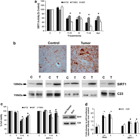 CK2 inhibitor-mediated downregulation of SIRT1 activity regulates p53. ( a ) CK2-Is decrease SIRT1 activity in glioma cells both in the presence and absence of TNF α . Glioma cells were treated with TNF α in the presence or absence of DRB/Api and subsequently SIRT1 activity was determined. Values represent the means±S.E.M. from three independent experiments. ( b ) SIRT1 immuno-localization in glioma tumor samples as revealed by IHC and western blot analysis. Cryosections of glioma and adjacent normal tissues were immunostained for SIRT1 as described in Materials and Methods. Images were taken at 40 × magnification. Western blot analysis also demonstrated elevated SIRT1 levels in GBM tumor as compared with surrounding non-neoplastic tissue. The figure shows blots from five independent tumor samples with identical results. ( c ) CK2-I-mediated decrease in SIRT1 activity regulates glioma cell viability. The viability of glioma cells transfected with SIRT1 over-expression vector and treated with Apigenin or TNF α or both for 24 h, was determined by MTS assay. The graph represents percentage viable cells of control. Inset shows the overexpressed SIRT1 levels as determined by immunoblotting. ( d ) CK2-I-mediated increase in p53 transcriptional activity is abrogated upon SIRT1 over-expression. Glioma cells co-transfected with SIRT1 over-expression vector and p53 luciferase reporter constructs were treated with Apigenin or TNF α or both and reporter assay was performed to determine p53 transcriptional activity. The graph represents fold change in p53 luciferase reporter activity over control. Values in ( a , c and d ) represent the means±S.E.M. from three independent experiments. * Denotes significant change from control ( P
