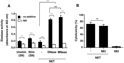 Inhibition of neutrophil elastase does not inhibit NET-induced cytotoxicity. (A) The supernatants of unstimulated (Unstim) or stimulated (Stim) neutrophils (50 nM PMA for 4 h) were collected and analyzed for elastase activity in the absence ( filled bars ) or presence ( open bars ) of neutrophil elastase inhibitor (NEI). Likewise, NET were isolated from stimulated cells and digested with DNase or MNase or kept undigested (−), followed by analysis of elastase activity in the same way. (B) Cytotoxicity of A549 cells was measured after 16 h treatment with NET (DNase-digested) in the absence or presence of NEI. Similar results were seen for MNase- or non-digested NET as well as with different NEI concentrations from 0.125 to 1 mM. Shown are representative data of three independent experiments (mean SD), *** p
