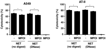 Myeloperoxidase inhibition moderately decreases NET-induced cytotoxicity of epithelial cells. Nondigested or DNase-digested NET were pre-incubated without or with myeloperoxidase inhibitor (MPOI), followed by incubation of NET with epithelial cells, A549 or AT-II cells, for 16 h and quantification of cytotoxicty. MPOI alone (37 ng/ml) was not toxic for the epithelial cells. Shown are representative data of three (for AT-II cells, n = 2) independent experiments (mean SD), * p