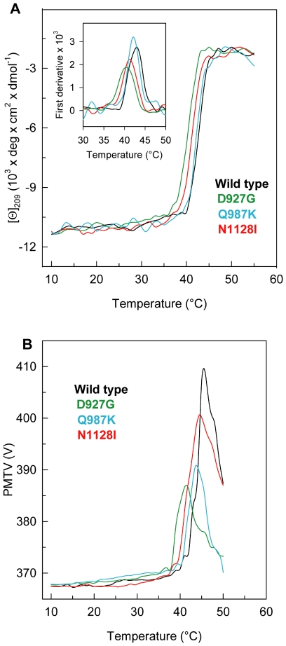 Thermal transition of PTPρ wild-type and mutants. ( A ) PTPρ wild-type, N1128I, Q987K and D927G were heated from 10°C to 72°C in a 0.1-cm quartz cuvette at 0.2 mg/ml in 20 mM Tris/HCl, pH 7.5 containing 0.2 M NaCl and 0.4 mM DTT. The dichroic activity at 209 nm was monitored continuously every 0.5°C. The inset shows the first derivative of the same data. ( B ) PMTV data recorded in the same experiments shown in ( A ).