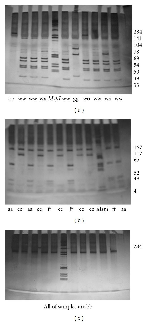 Electrophoresis in 8% polyacrylamide gel of exon 2 amplification products of gene BoLA-DRB3 digested by endonucleases Rsa I (b), Hae III (a), and BstYI (c). Msp I fragments of plasmid pUC19 are used as a molecular marker. The length of fragments composing Rsa I, Hae III, or Bst YI DNA patterns is shown on pictures.