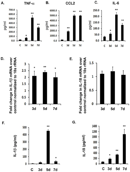 JEV induces the production of IL-1β and IL-18 in vivo . Infection was carried out in BALB/c mice with 5×10 5 PFU of JEV Intravenously. Brain samples were isolated from mock-infected control (C) as well JEV infected mice after 3 d, 5 d and 7 d post infection. ( A–C ) Cytokine levels were estimated using CBA. The graphs represent the levels of pro-inflammatory cytokines, TNF-α, CCL2 and IL-6 in pg/ml from protein homogenates isolated from infected and mock-infected mice brain ( D–E ) qRT-PCR analysis was carried out from total RNA isolated from mock-infected and JEV infected mice brains on all the time points and levels of IL-1β as well as IL-18 mRNA were measured. Graphs represent fold change in mRNA values with respect to mock-infected control normalized to 18 s rRNA internal control. ( F–G ) ELISA study was carried out to measure the levels of mature IL-1β and IL-18 cytokine from JEV infected as well as uninfected brain samples. Graphs represent the cytokine levels in pg/ml in mock-infected control as well as infected brain samples. Data represent mean ± SEM of 5 animals in each group. Statistical differences were evaluated using one way ANOVA with Bonferroni's post hoc test. *, **, Statistical differences in comparison to mock-infected control values (* p