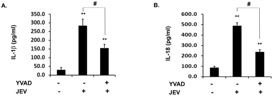 Caspase-1 activity is required for the production of IL-1β and IL-18 during JEV infection. BV-2 cells were incubated with 5 µM YVAD for 30 min to inhibit caspase-1 activity followed by JEV infection. ( A–B ) ELISA for IL-1β and IL-18 was carried out in JEV infected BV-2 cells upon caspase-1 inhibition. The cytokine levels were then measured using ELISA and the values are represented in pg/ml. Data represent mean ± SEM from 3 independent experiments performed in duplicate. Statistical differences were evaluated using one way ANOVA with Bonferroni's post hoc test. **, Statistical difference in comparison to mock-infected control values (** p